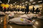 Tzukiji Fish Market