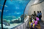 Barcelona Aquarium-23