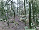 Laurisilva Forest