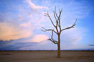 a tree in the desert near the flinders ranges