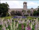 Flowers in Balboa Park