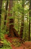 Scenes from the hike to Sol Duc Falls, Olympic National Park