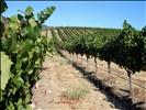 DSC19935, Artesa Vineyards & Winery, Sonoma Valley, California, USA