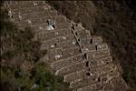 White llama terraces - Choquequirao - Peru (2)