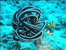 Diving around Gili Trawangan