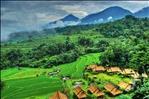 Rice fields view from Saranam Eco-Resort