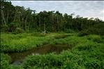 Manu National Park-69
