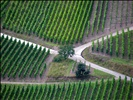 géométrie viticole / vineyards geometry