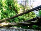 Logs in Fern Canyon