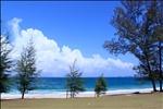 Sibu Island tree