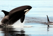 Top 10 Places for Whale Watching