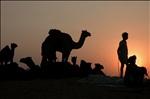 And the Sun Sets on Pushkar Fair