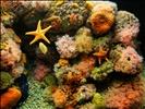 DSC26561, Monterey Bay Aquarium, California, USA